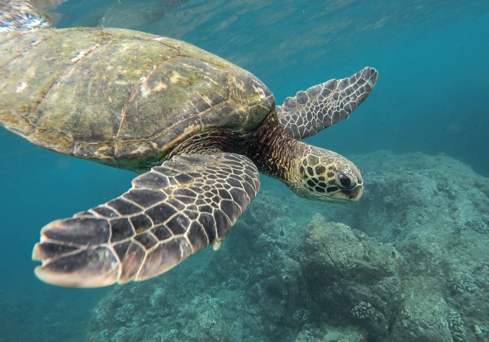 tartaruga marina foto